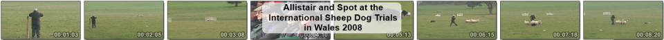 video clip of Allistair in action at the 2008 International Sheep Dog Trials